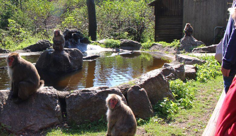 Affen am Teich