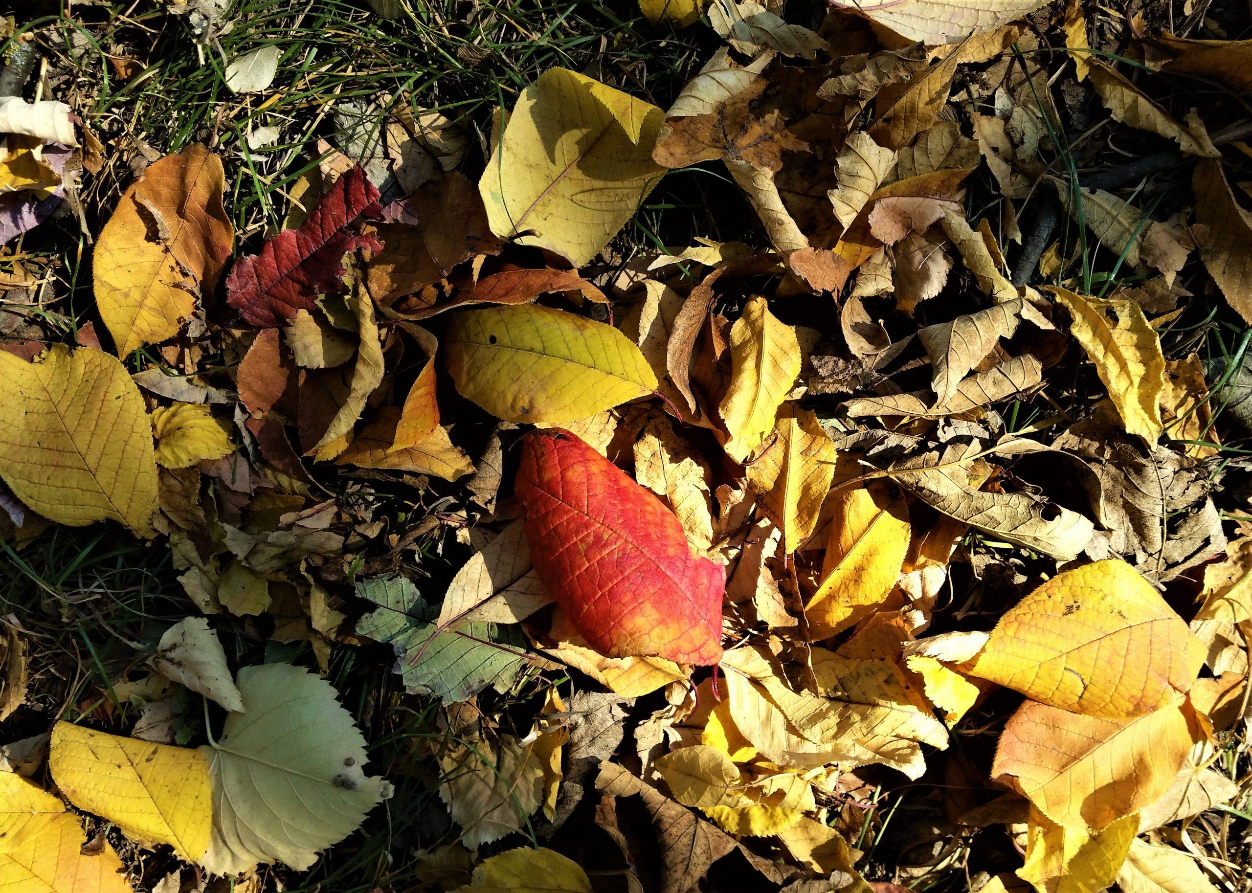 Der Herbst – Abschied und Neuanfang