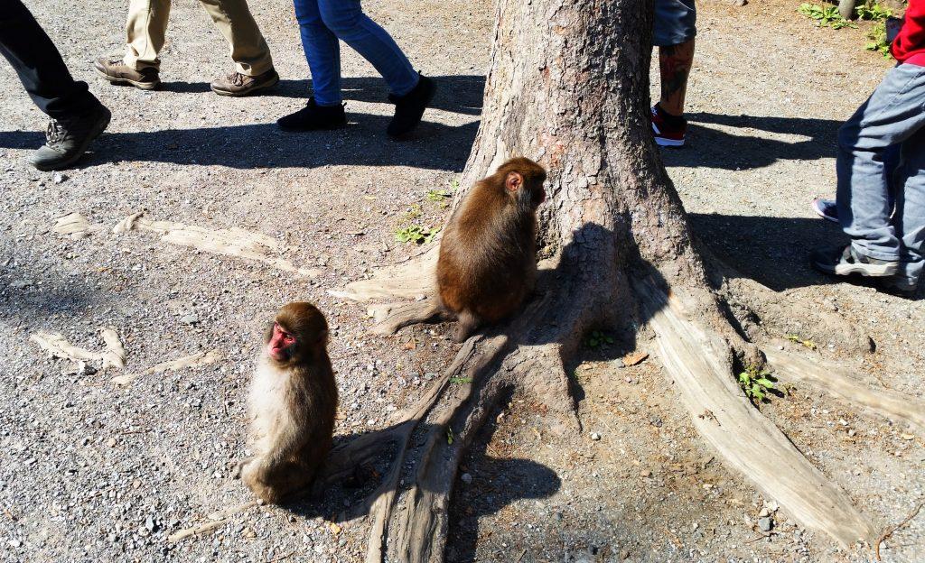 Affen am Weg